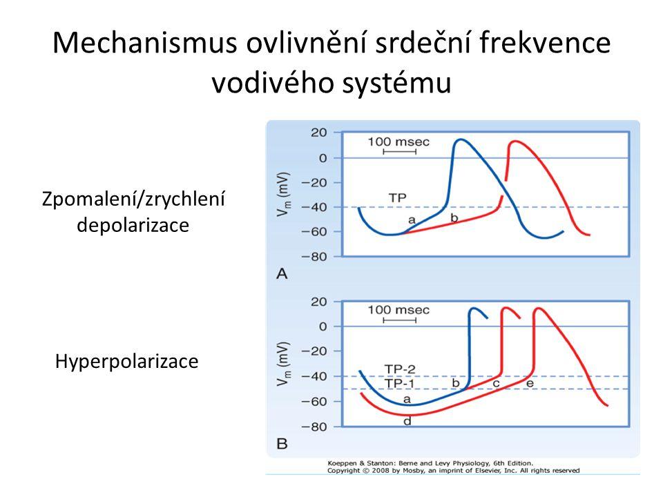 Mechanismus ovlivnění srdeční frekvence vodivého systému
