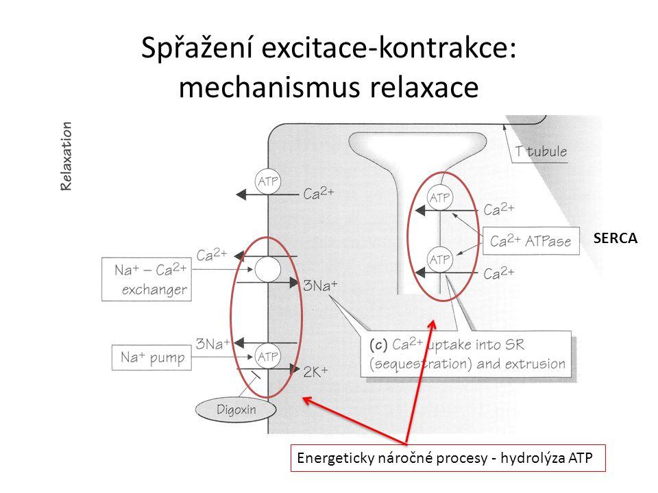 Spřažení excitace-kontrakce: mechanismus relaxace