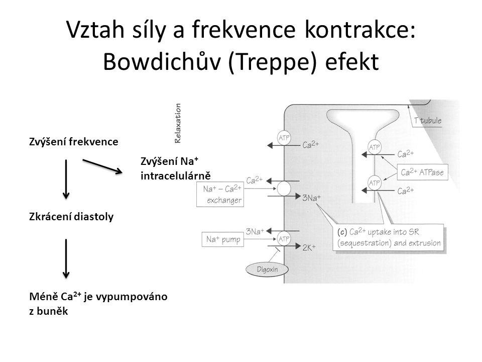 Vztah síly a frekvence kontrakce: Bowdichův (Treppe) efekt