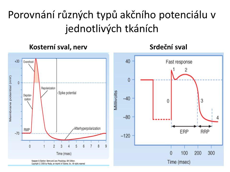 Porovnání různých typů akčního potenciálu v jednotlivých tkáních
