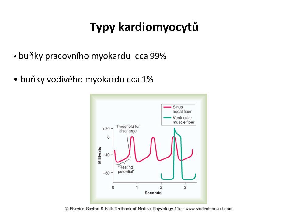 Typy kardiomyocytů buňky vodivého myokardu cca 1%
