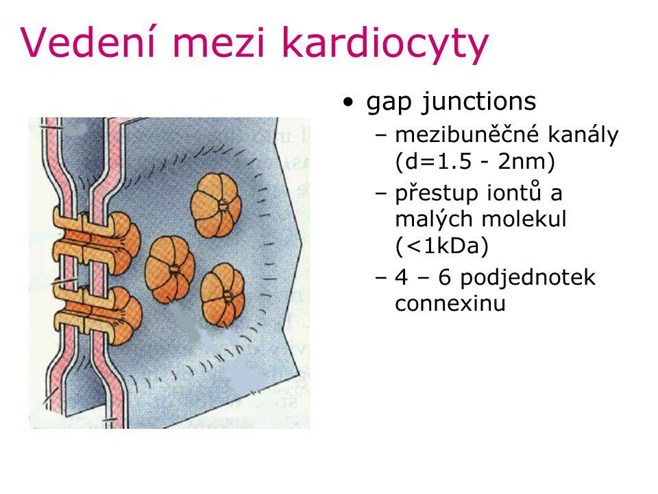 Vedení mezi kardiocyty