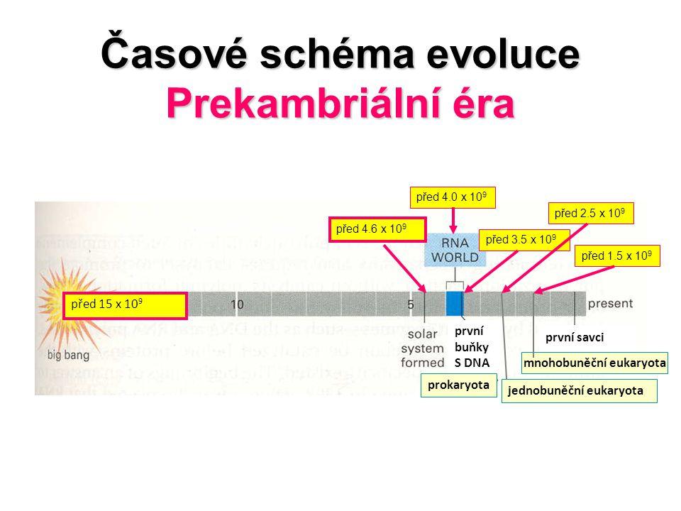 Časové schéma evoluce Prekambriální éra