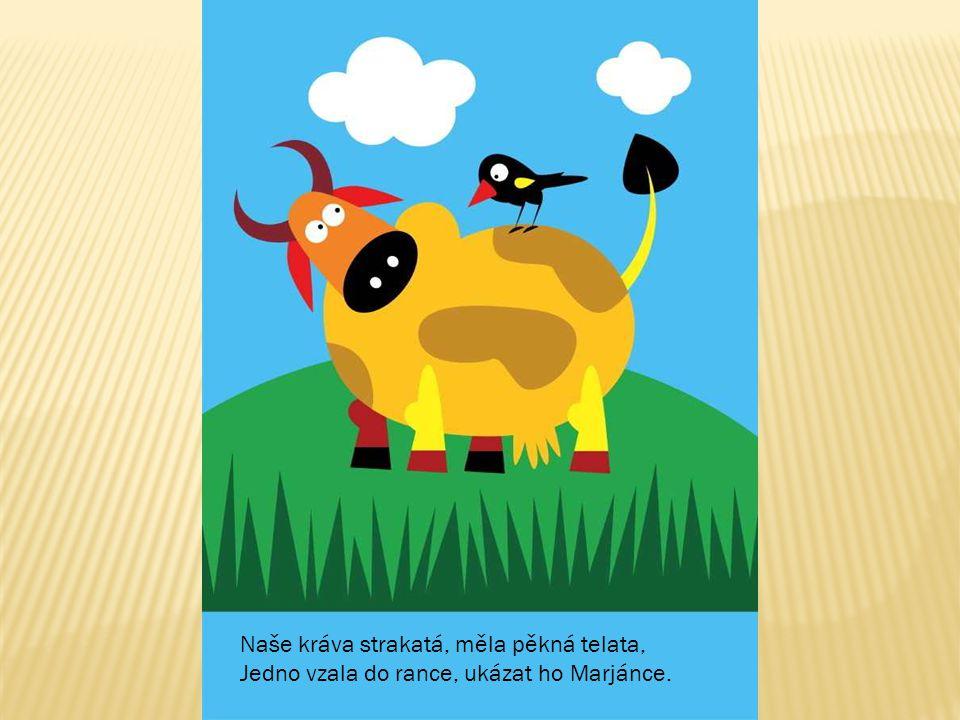 Naše kráva strakatá, měla pěkná telata,