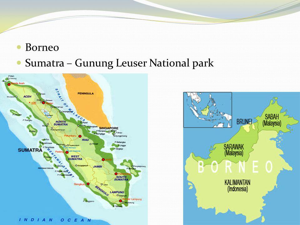 Borneo Sumatra – Gunung Leuser National park