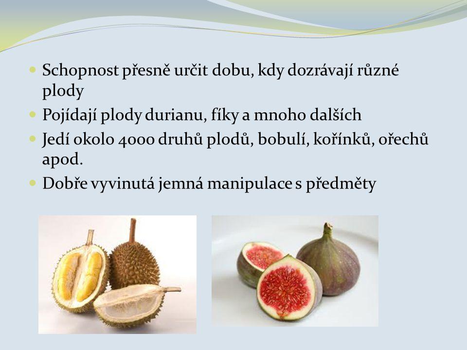 Schopnost přesně určit dobu, kdy dozrávají různé plody