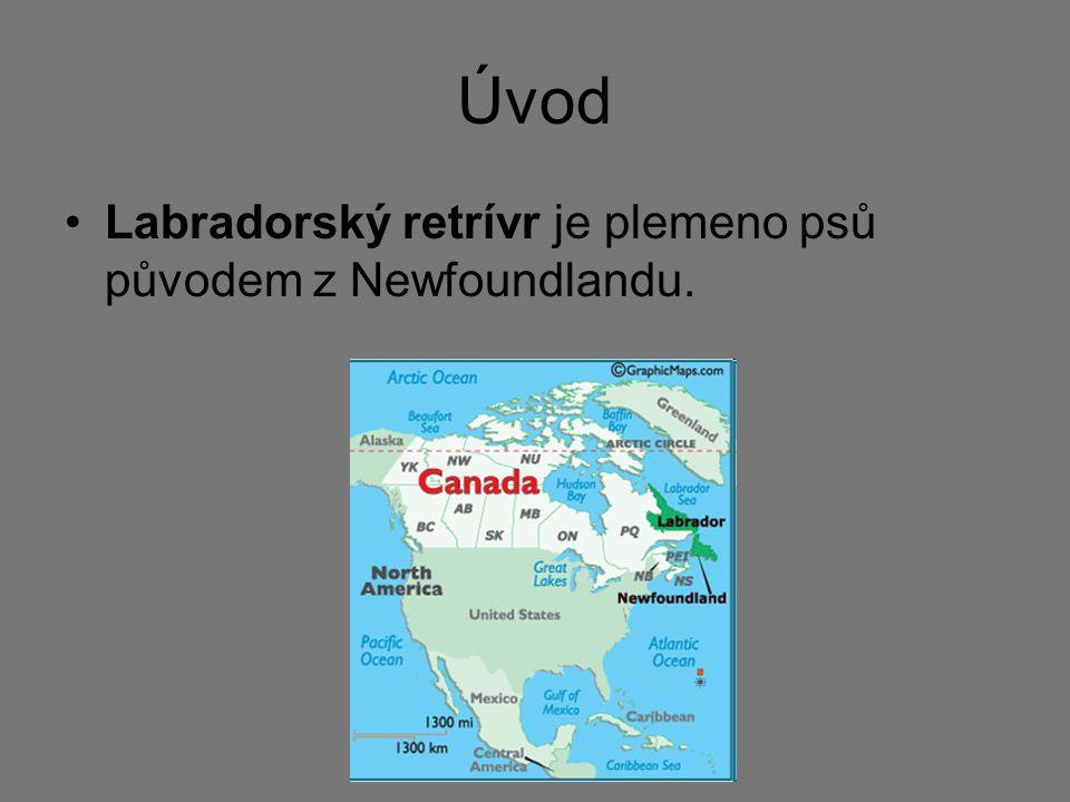 Úvod Labradorský retrívr je plemeno psů původem z Newfoundlandu.