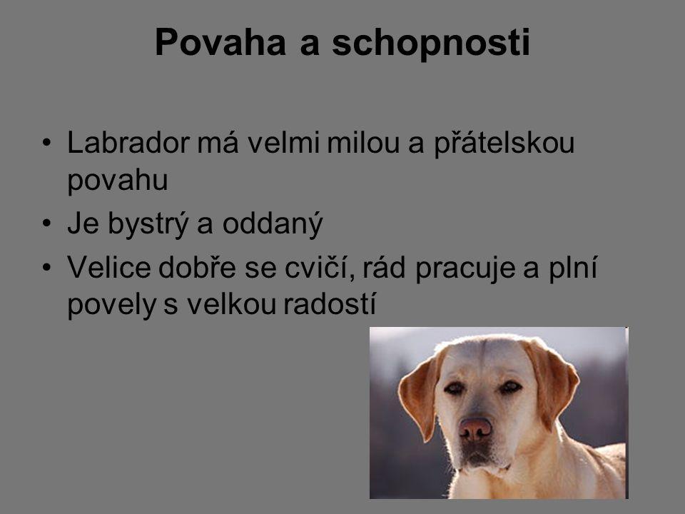Povaha a schopnosti Labrador má velmi milou a přátelskou povahu