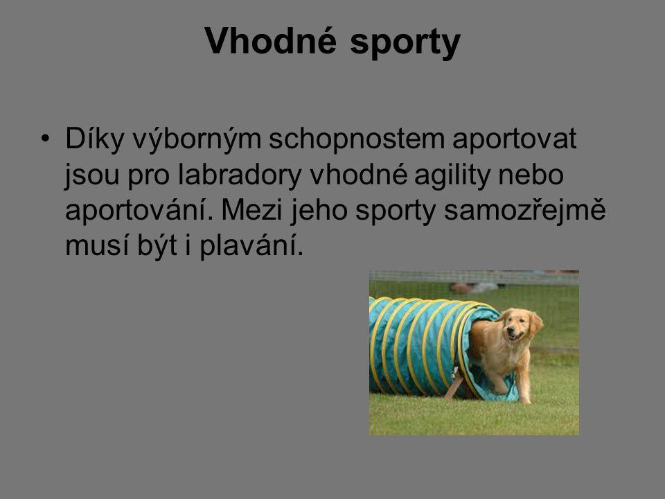 Vhodné sporty Díky výborným schopnostem aportovat jsou pro labradory vhodné agility nebo aportování.