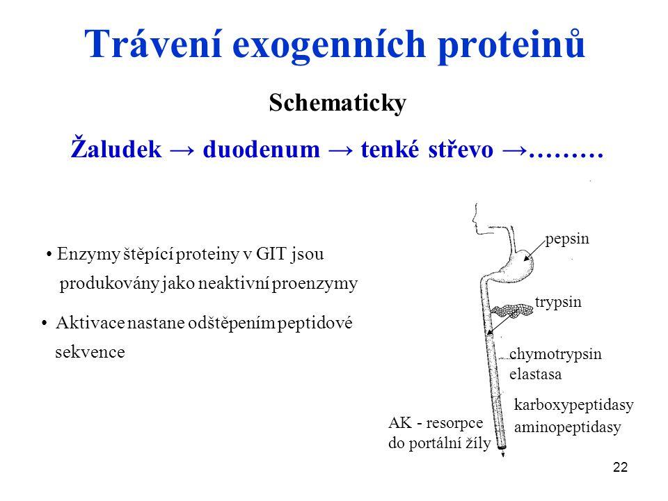 Trávení exogenních proteinů