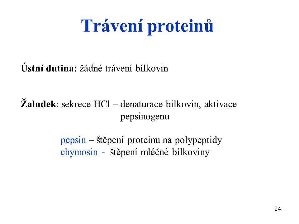 Trávení proteinů Ústní dutina: žádné trávení bílkovin