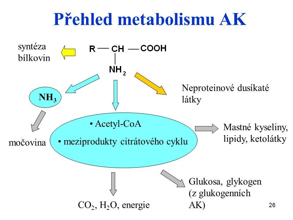 Přehled metabolismu AK