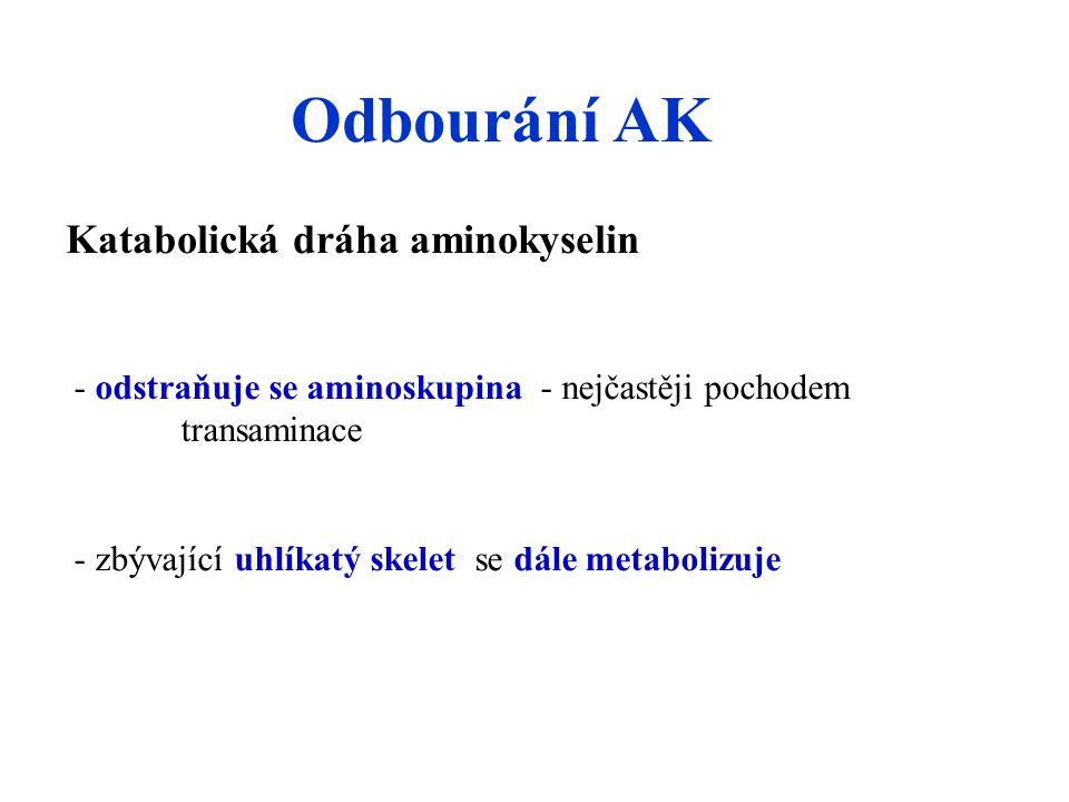 Odbourání AK Katabolická dráha aminokyselin