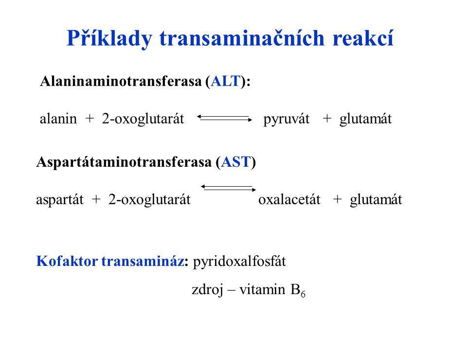 Příklady transaminačních reakcí