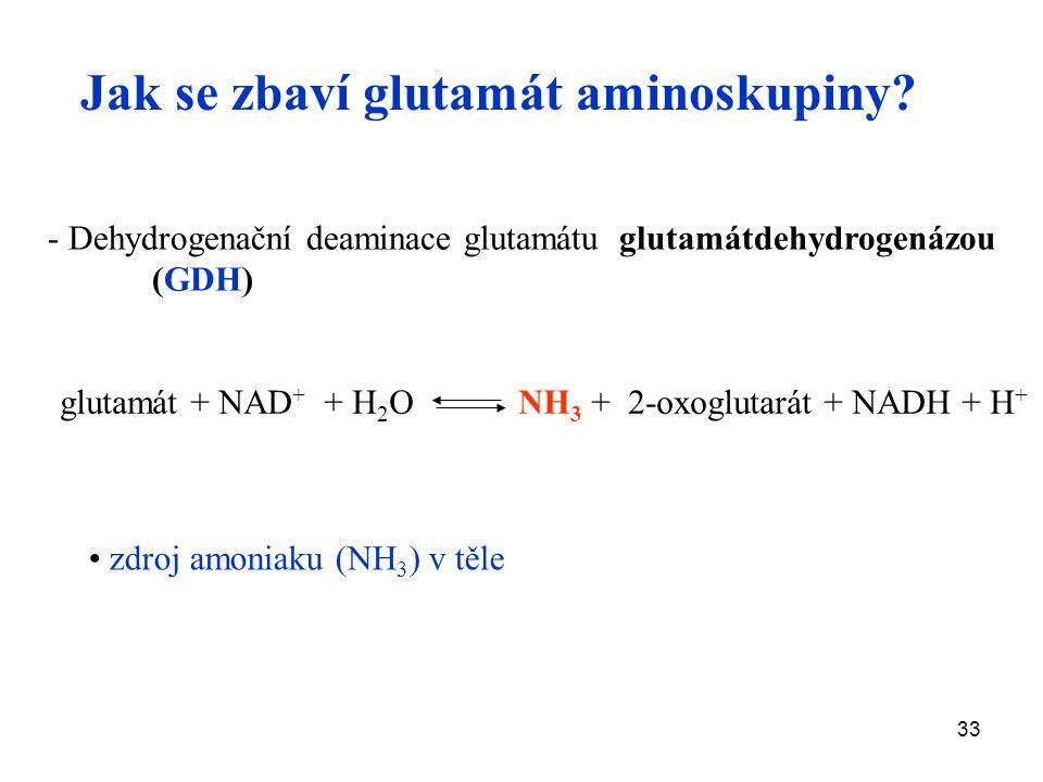 Jak se zbaví glutamát aminoskupiny