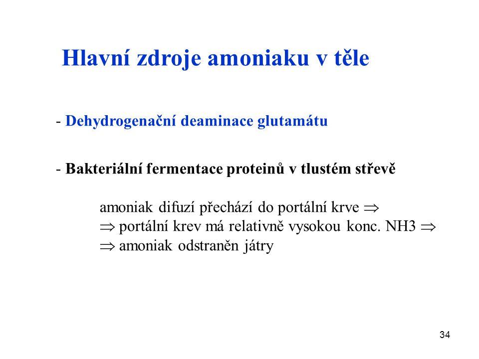 Hlavní zdroje amoniaku v těle