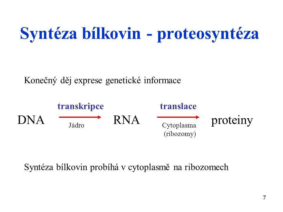 Syntéza bílkovin - proteosyntéza