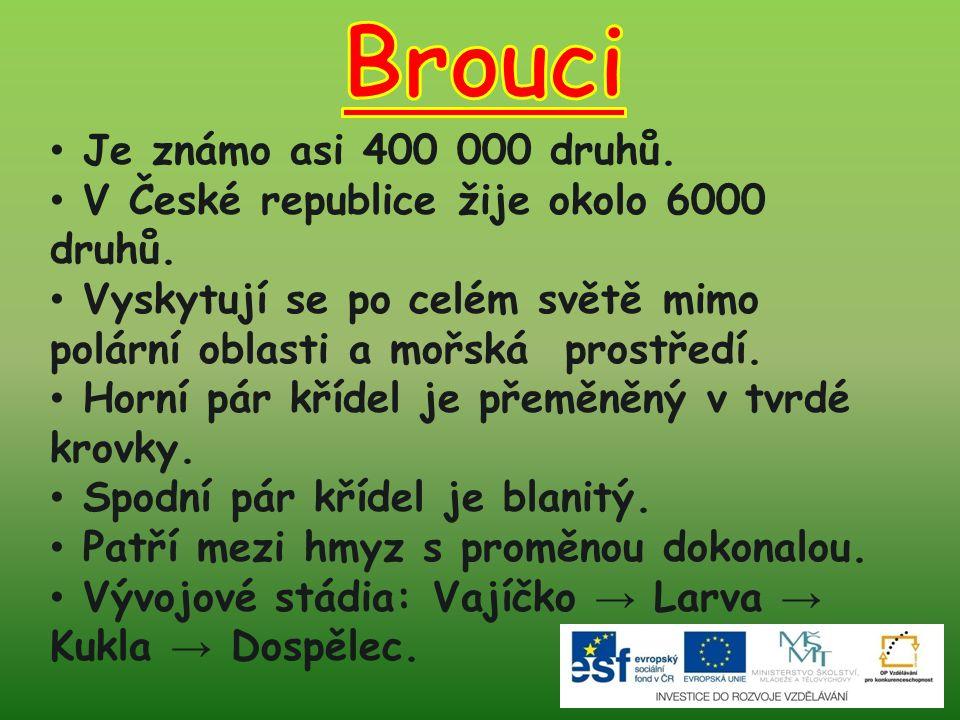 Brouci Je známo asi 400 000 druhů.
