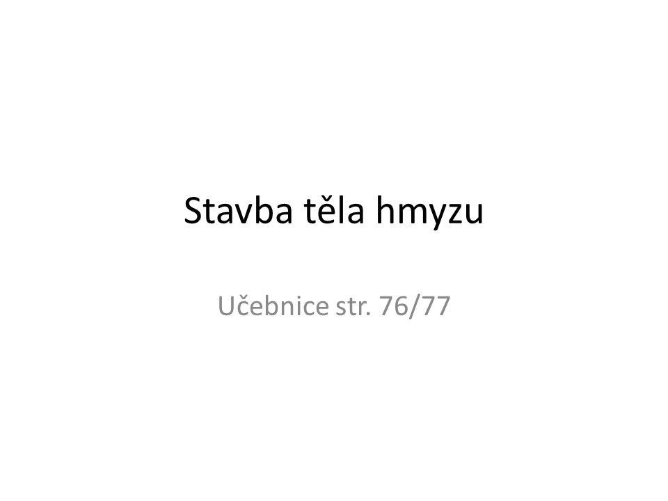 Stavba těla hmyzu Učebnice str. 76/77