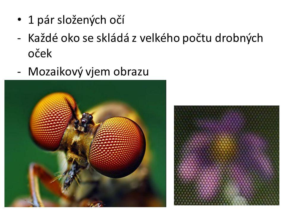1 pár složených očí Každé oko se skládá z velkého počtu drobných oček Mozaikový vjem obrazu