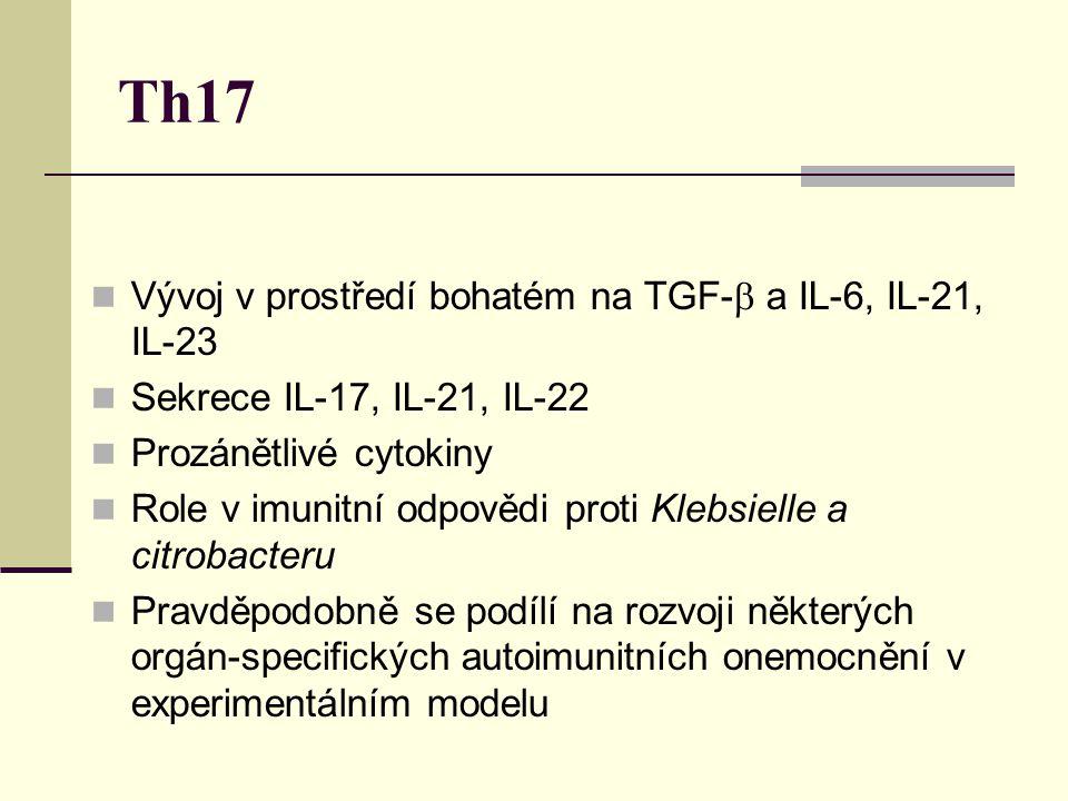 Th17 Vývoj v prostředí bohatém na TGF-b a IL-6, IL-21, IL-23