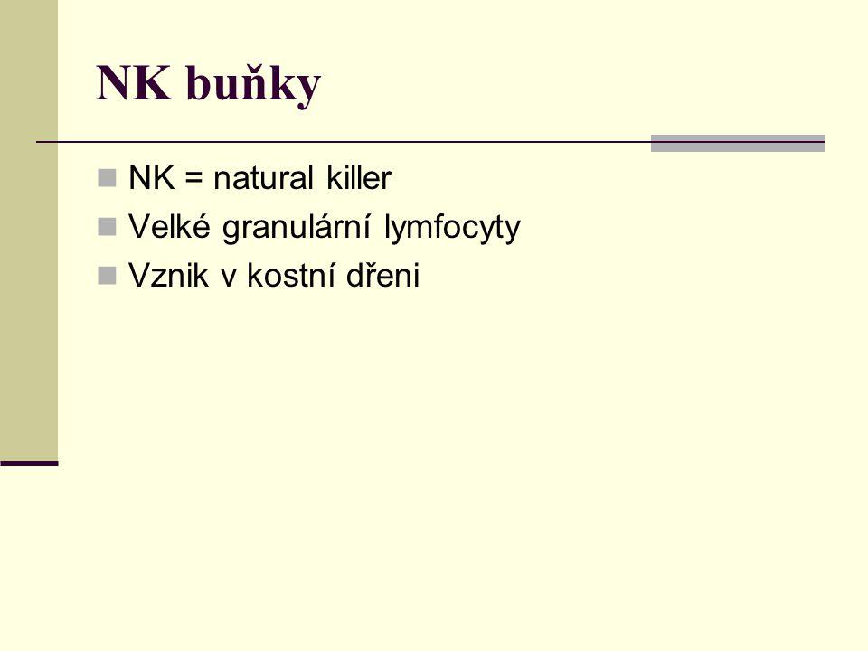 NK buňky NK = natural killer Velké granulární lymfocyty