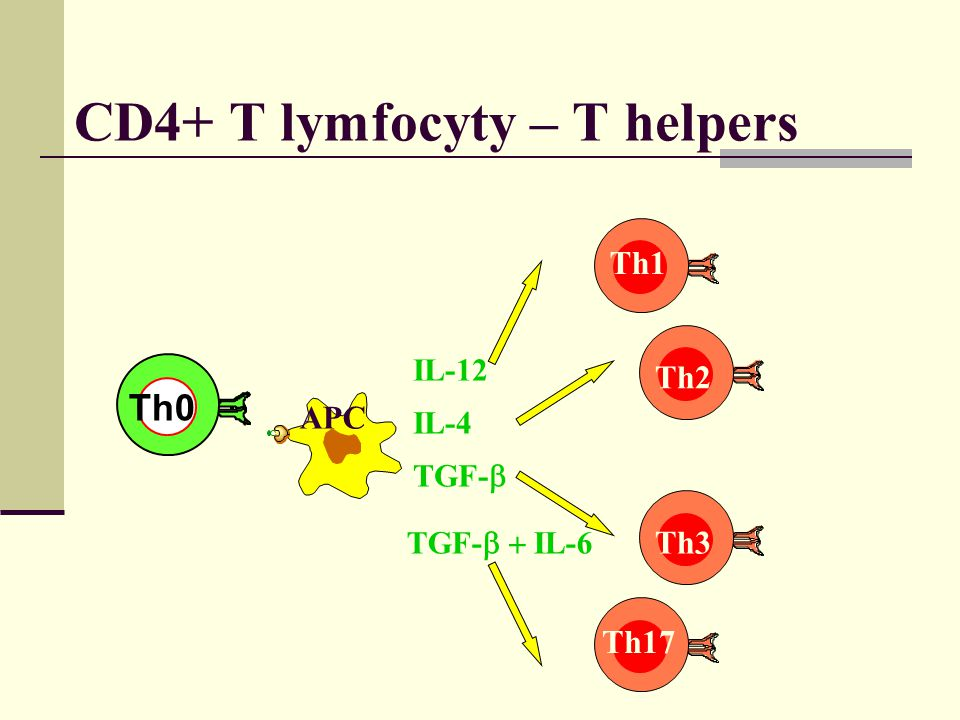 CD4+ T lymfocyty – T helpers