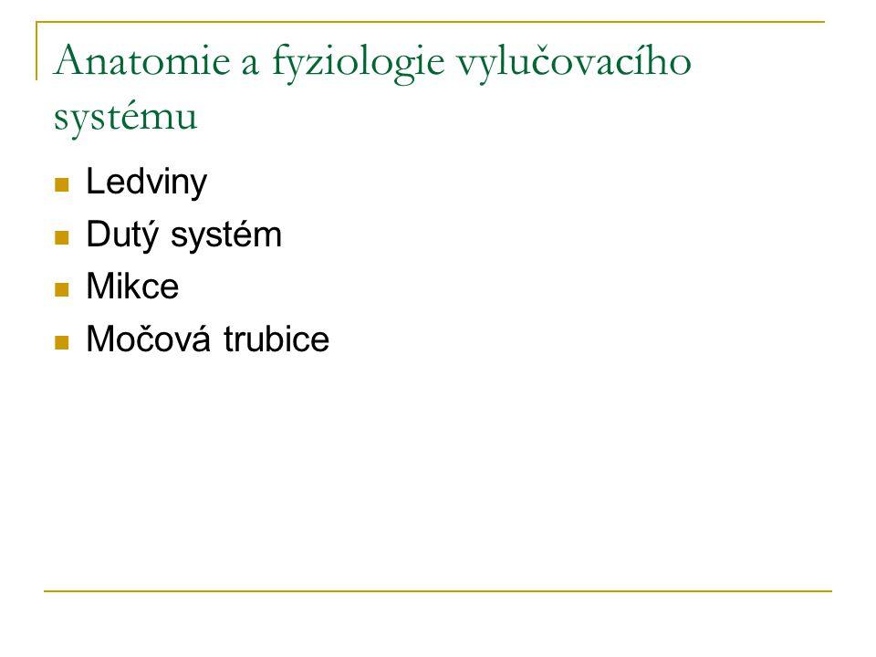 Anatomie a fyziologie vylučovacího systému