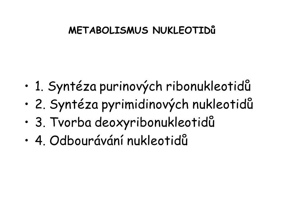 METABOLISMUS NUKLEOTIDů