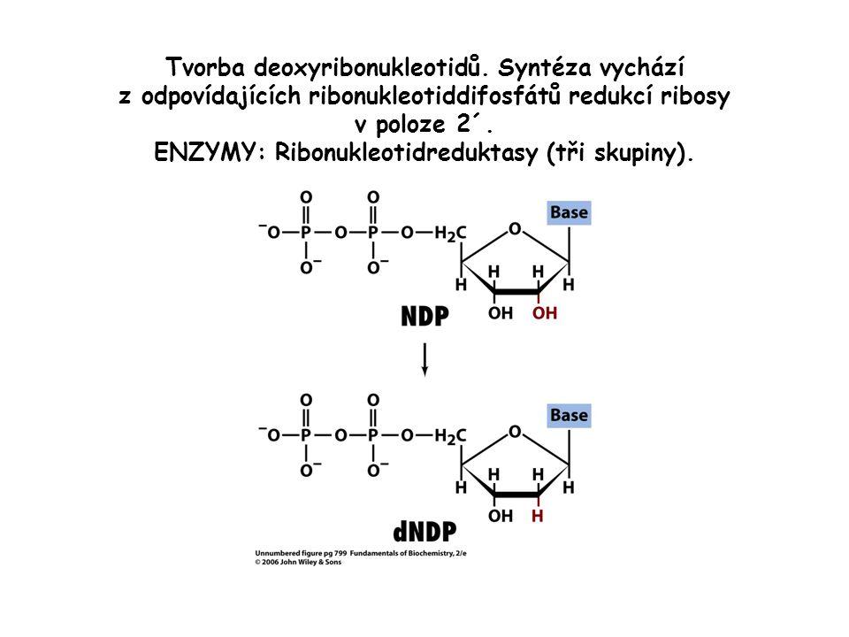 Tvorba deoxyribonukleotidů