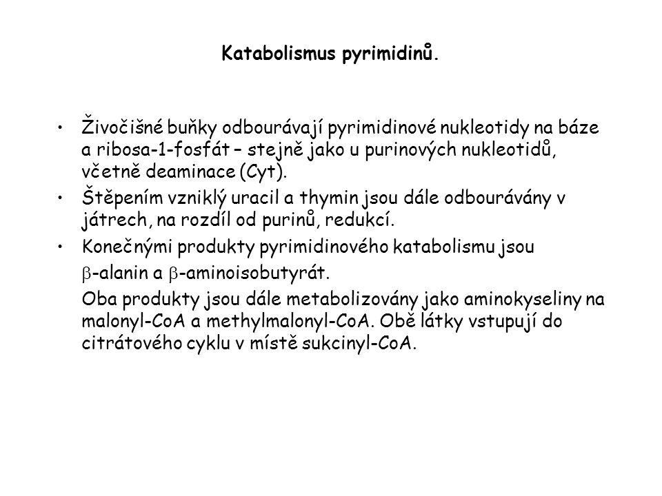Katabolismus pyrimidinů.