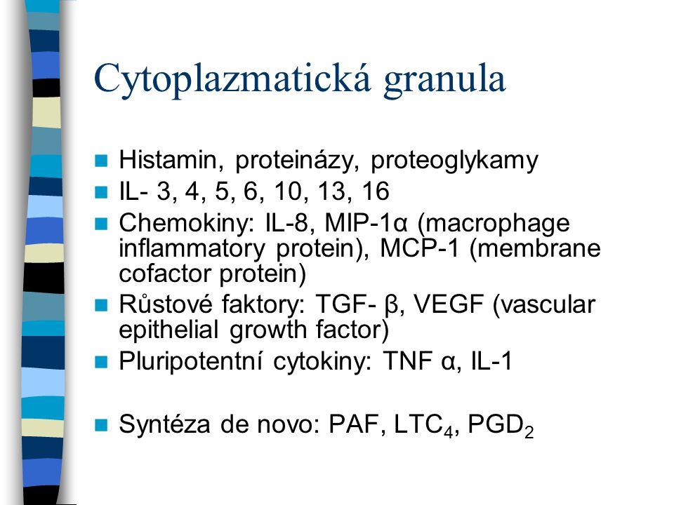 Cytoplazmatická granula