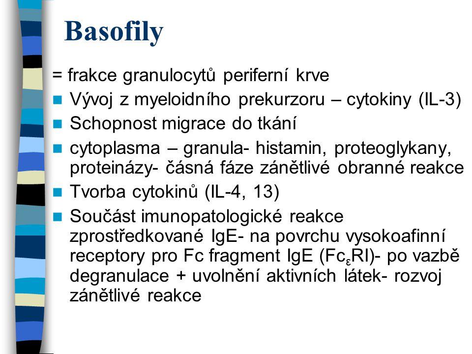 Basofily = frakce granulocytů periferní krve