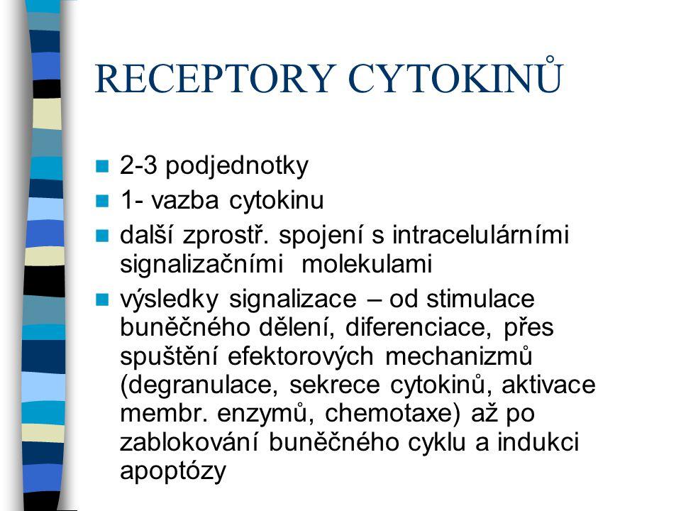 RECEPTORY CYTOKINŮ 2-3 podjednotky 1- vazba cytokinu