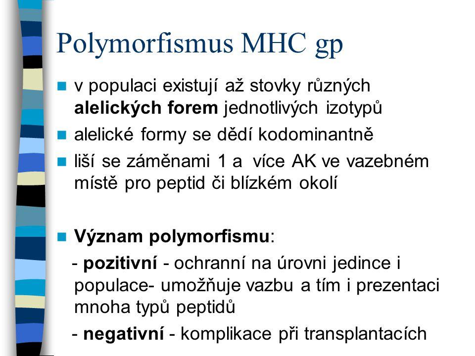 Polymorfismus MHC gp v populaci existují až stovky různých alelických forem jednotlivých izotypů. alelické formy se dědí kodominantně.