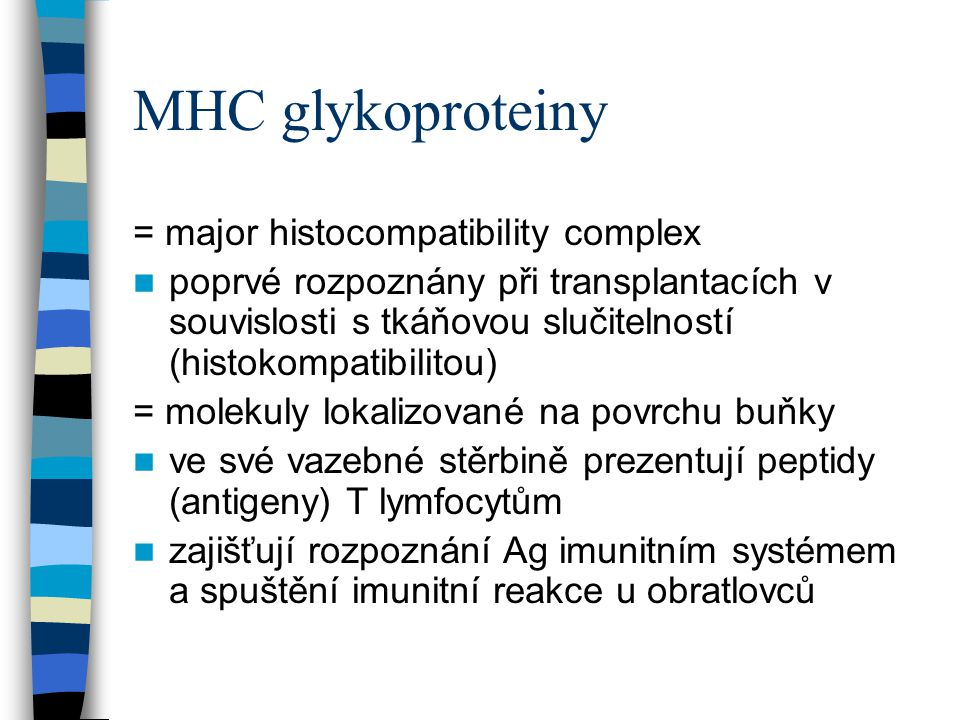MHC glykoproteiny = major histocompatibility complex