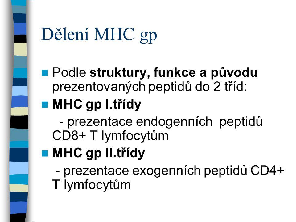 Dělení MHC gp Podle struktury, funkce a původu prezentovaných peptidů do 2 tříd: MHC gp I.třídy.