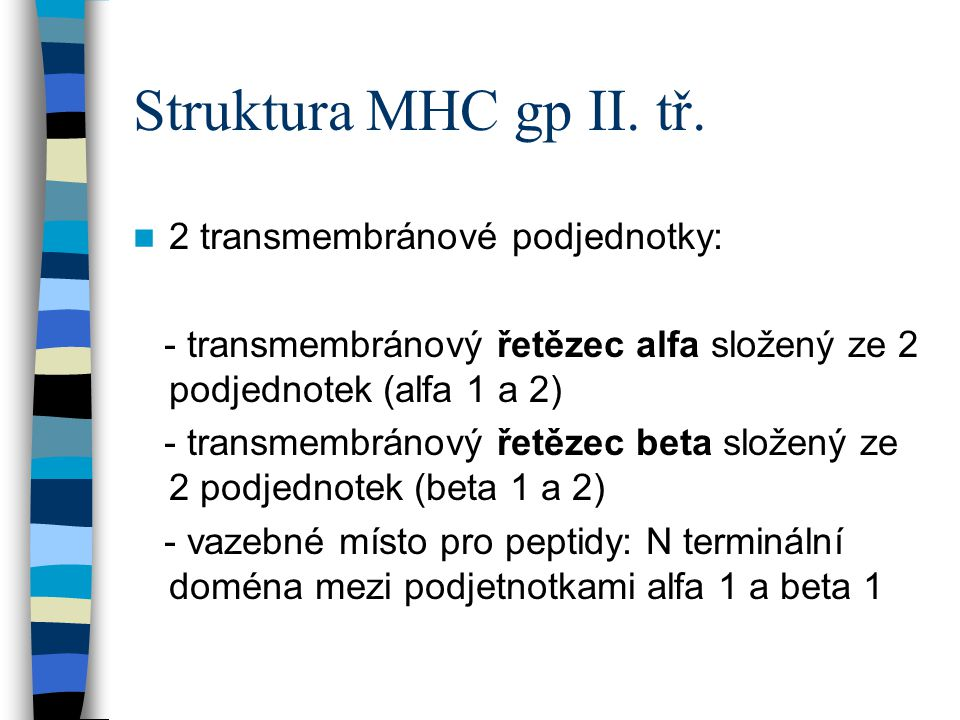 Struktura MHC gp II. tř. 2 transmembránové podjednotky: