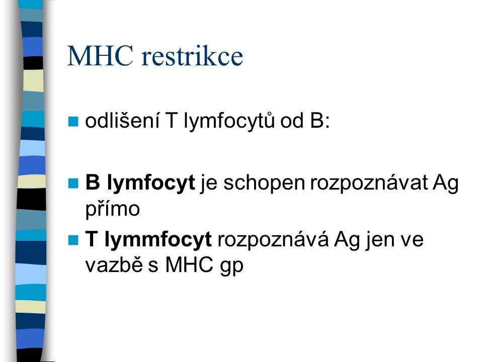 MHC restrikce odlišení T lymfocytů od B: