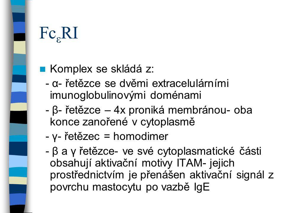FcεRI Komplex se skládá z: