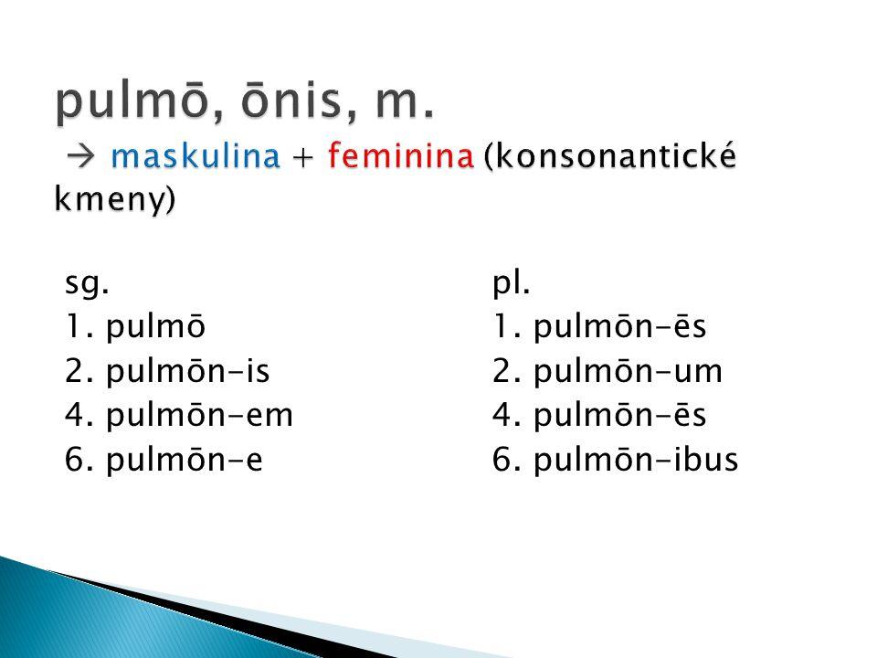 pulmō, ōnis, m.  maskulina + feminina (konsonantické kmeny)