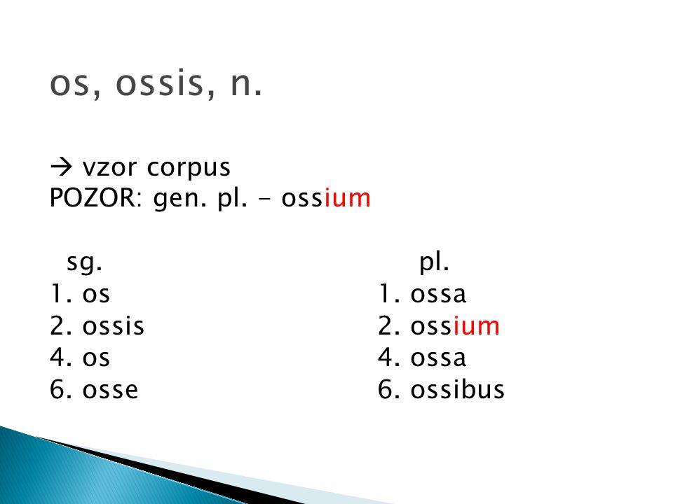 os, ossis, n.  vzor corpus POZOR: gen. pl. - ossium sg. pl.