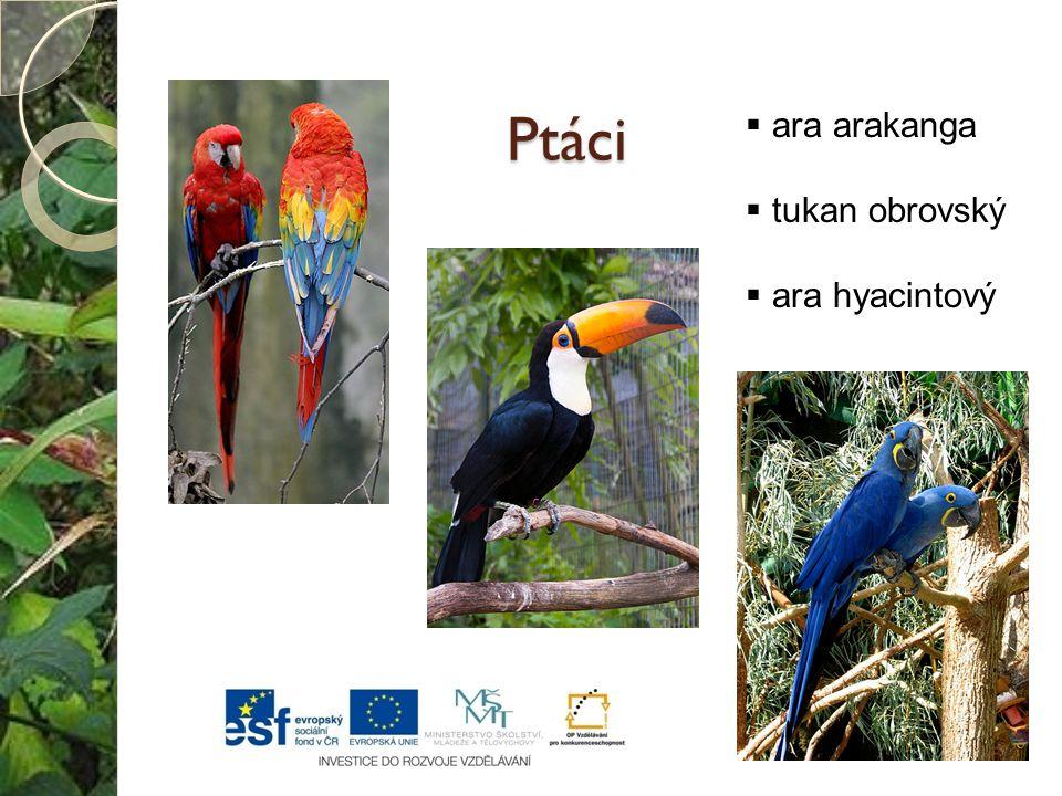 Ptáci ara arakanga tukan obrovský ara hyacintový