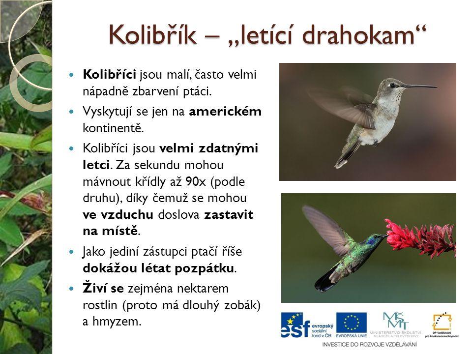 """Kolibřík – """"letící drahokam"""