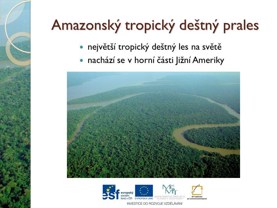 Amazonský tropický deštný prales
