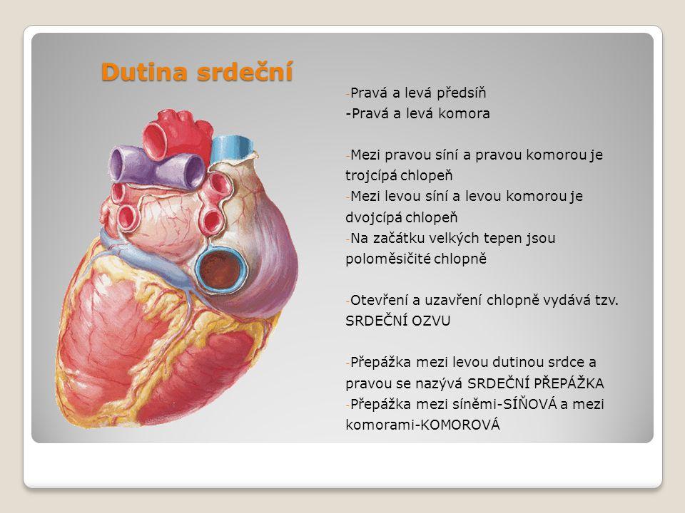 Dutina srdeční Pravá a levá předsíň -Pravá a levá komora
