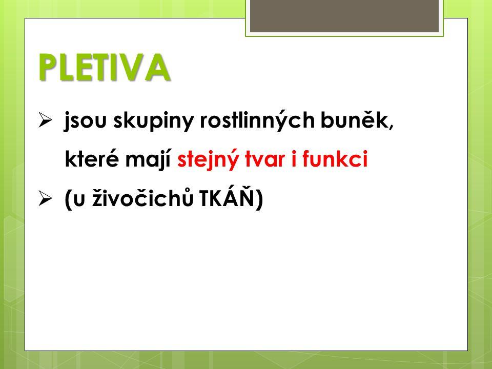 PLETIVA jsou skupiny rostlinných buněk, které mají stejný tvar i funkci (u živočichů TKÁŇ)