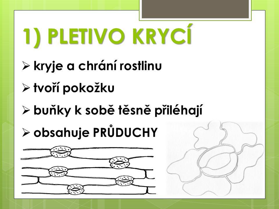 1) PLETIVO KRYCÍ kryje a chrání rostlinu tvoří pokožku