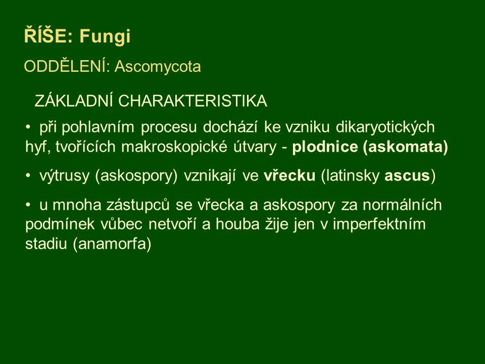 ŘÍŠE: Fungi ODDĚLENÍ: Ascomycota