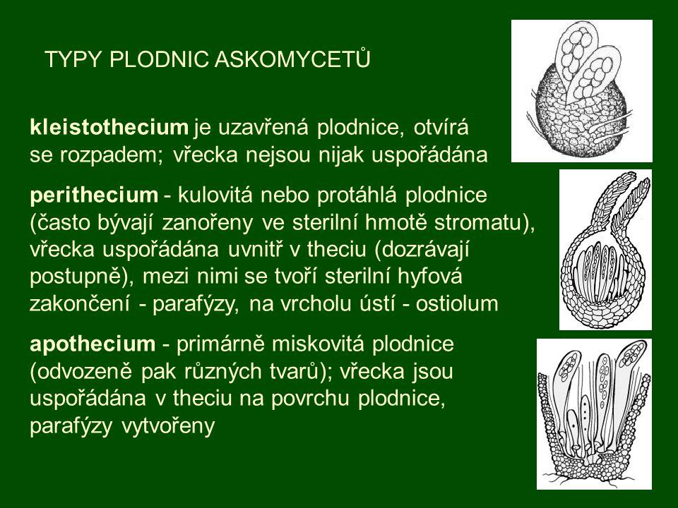 TYPY PLODNIC ASKOMYCETŮ